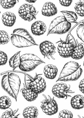 Raspberries and leaves sketch poster