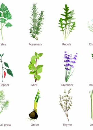Herbs and spices collection poster