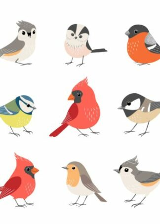 Winter birds collection poster