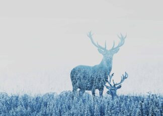Two deers in the forest poster