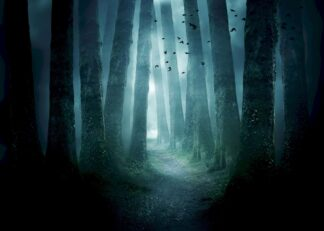 Gloomy pathway through a forest poster