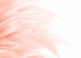 Bunch of feathers in peach color poster