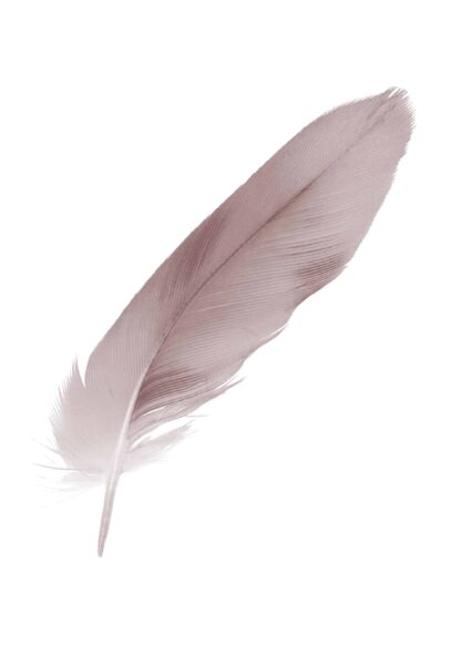 Beautiful violet – mauve soft feather painting poster