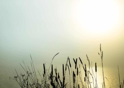 Lake with grass in the morning fog poster