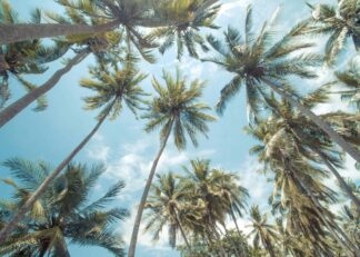 Palm trees on tropical island in summer holiday poster