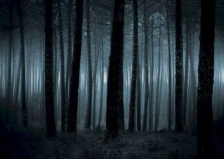 Dark and spooky forest poster