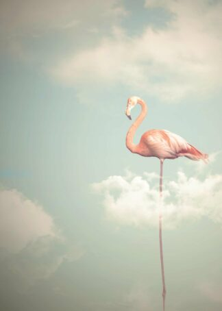 Flamingo with long legs in cloudy sky poster