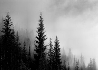 Pine forest on mountain monotone poster