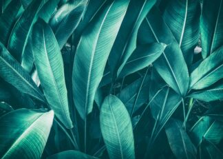 Dark green tropical leaves poster