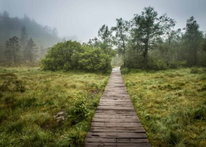 Green grass field with a wooden pathway poster