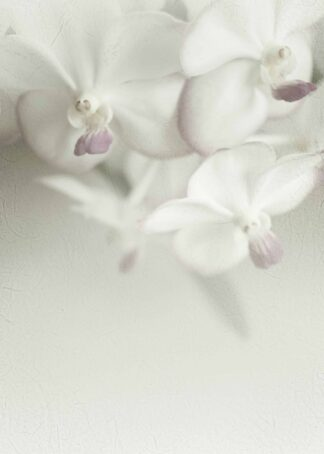 White orchids close-up poster