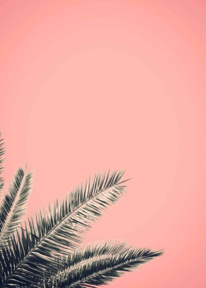 Palm tree in retro style poster