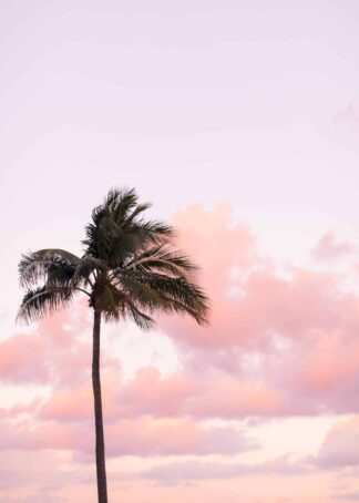 The palm tree under the pastel sky poster