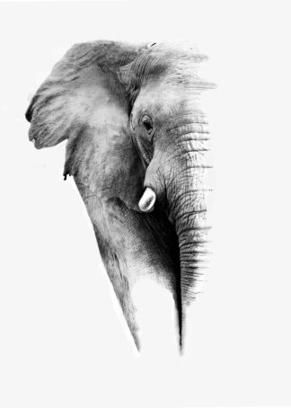 Artistic photograph of an elephant portrait poster