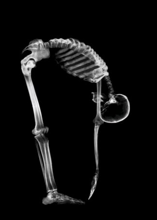 Exercise posture of a skeleton poster