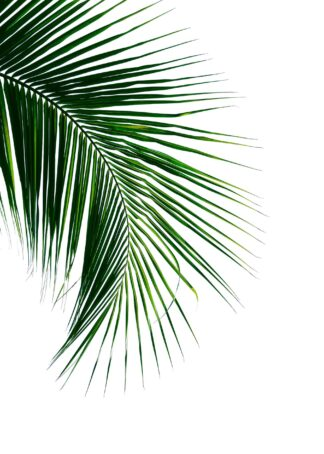 Tropical coconut palm leaf poster