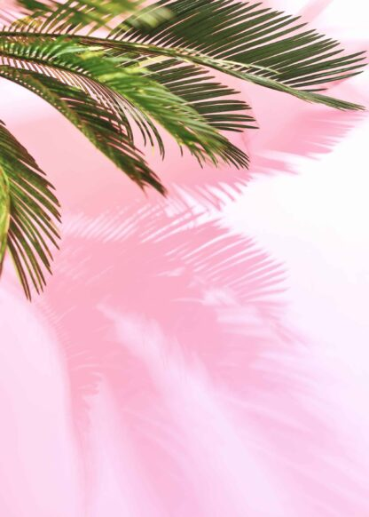 Palm leaves with a pastel background poster