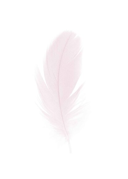 Beautiful pink feather in the white background poster
