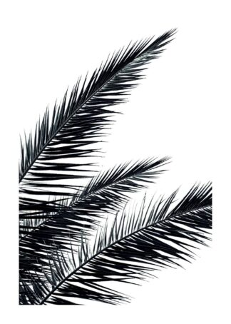 Black palms tree poster