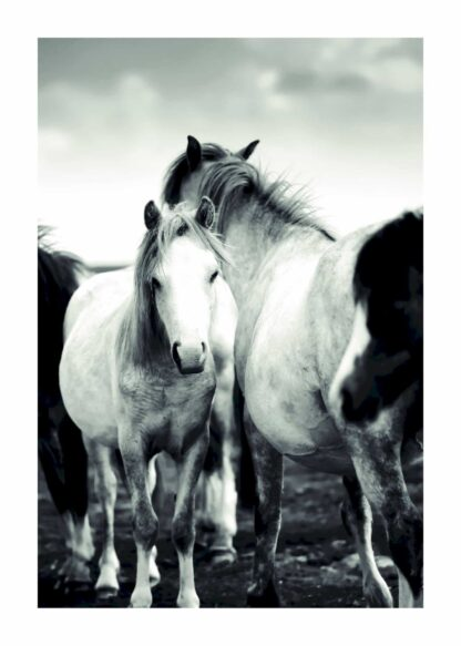 Ponies black and white poster