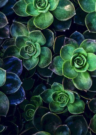Succulent flowers from above poster