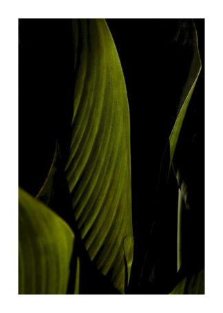 Banana leaves close-up poster