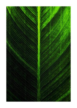 Banana leaf flat lay poster