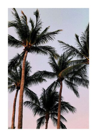 Palm trees under purple sky poster