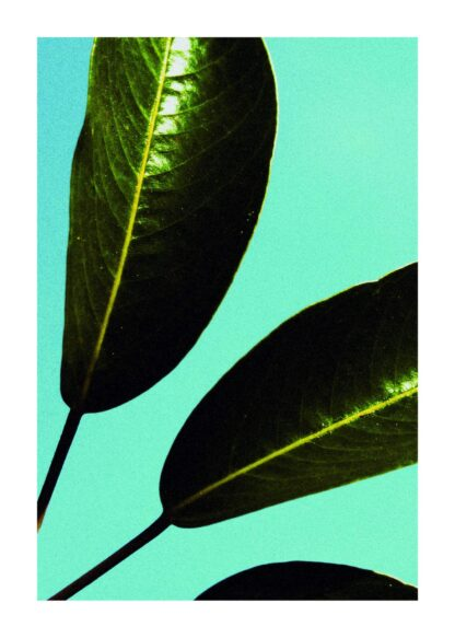 Green leaves on blue background close-up poster