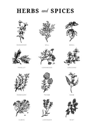 Herbs and spices illustration poster