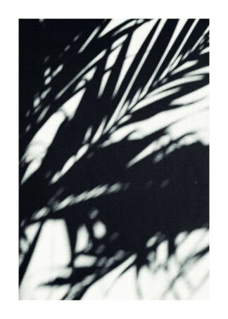 Palm shadow on wall poster