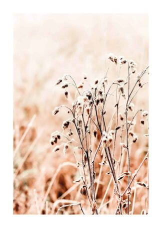 Dried grass on sunny day poster
