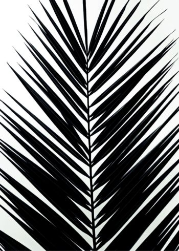 Palm leaf tropical poster
