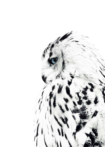 White owl side view poster