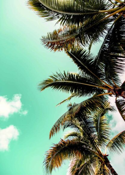 Palm row trees poster