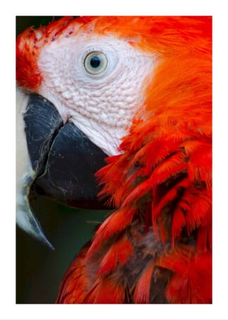 Parrot poster