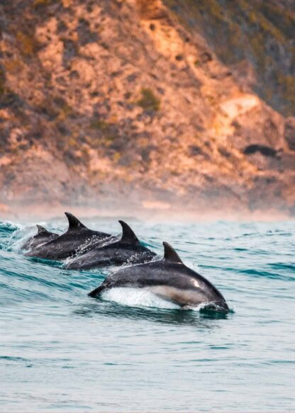 Synchronized dolphins poster
