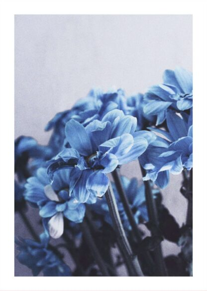 Blue flowers photography poster