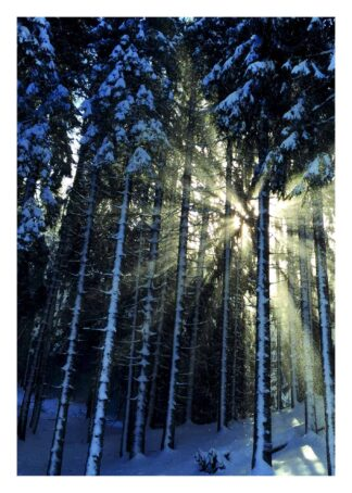Sunshine through snowy woods poster