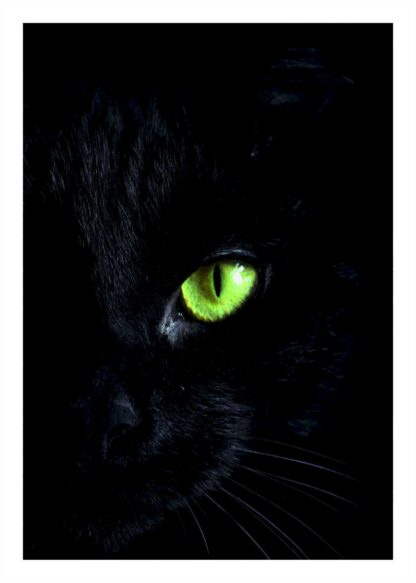 Black cat with green eye poster