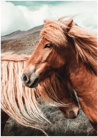 Brown horses close up poster