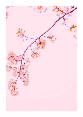 Pink tree with flowers poster