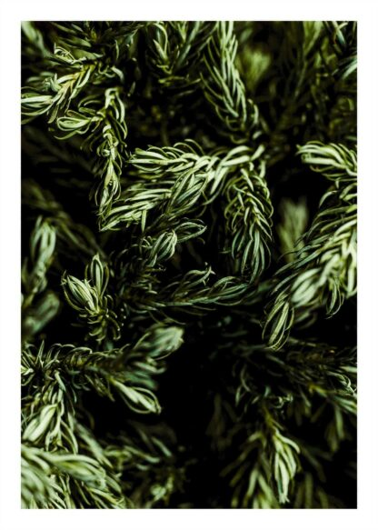 Green leafed plant poster