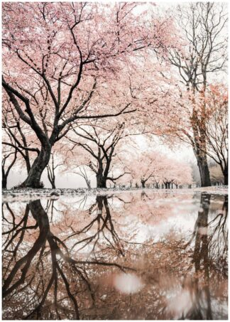 spring reflection on the water poster