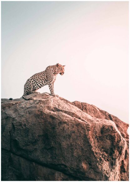 A leopard on top a rock poster
