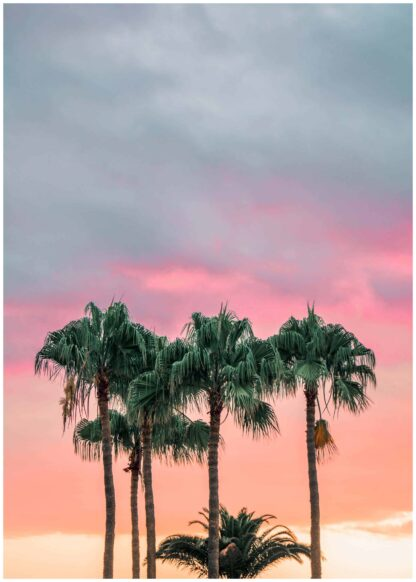 Palm trees on sunset poster