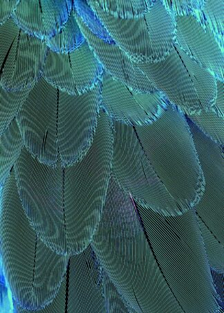 Blue-green feathers poster