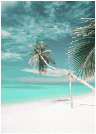 palm trees on white beach poster