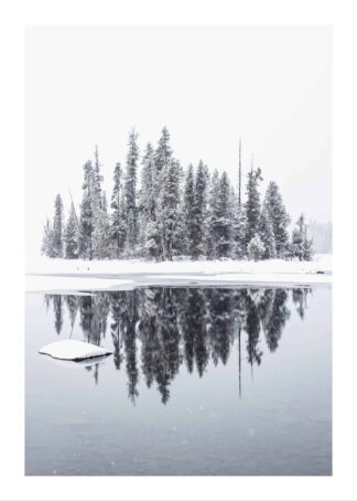 Trees reflection on water lake poster