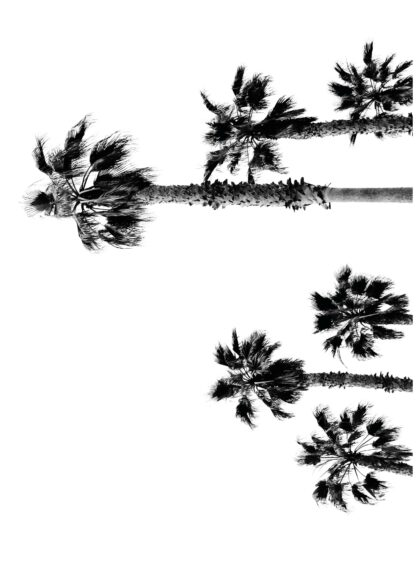 Palm-winds poster